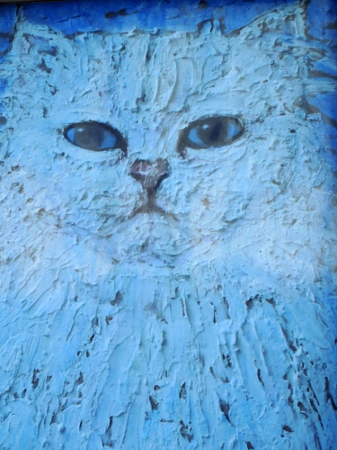 chat bleu.JPG