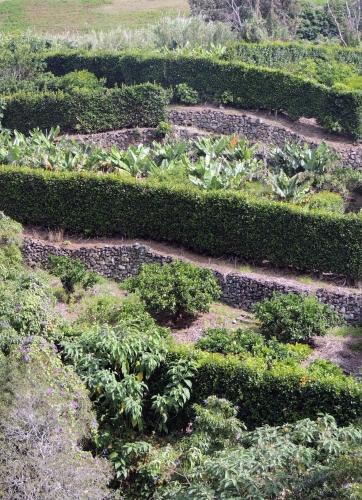 champs terrasse bananes.JPG