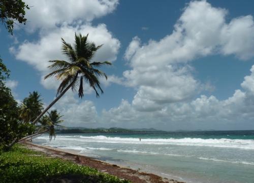Vie en Martinique.JPG