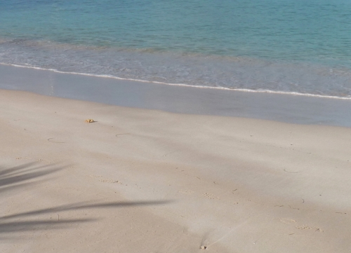 Sainte-Anne, crabe fantôme, Martinique